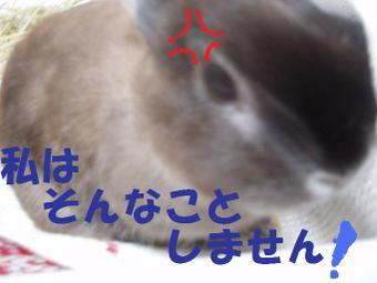 P9090024_2