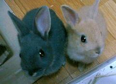 ウサギさんの破壊力